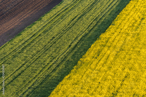 Foto Murales Agricultural landscape, arable crop fields