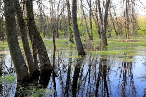 Plexiglas Lente swamp in spring forest