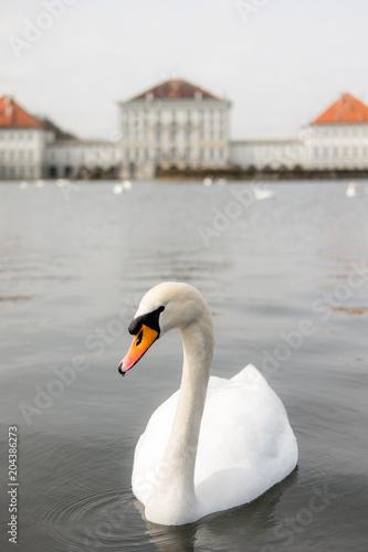 Fotobehang Zwaan Germany