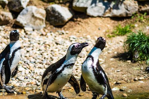 Fotobehang Pinguin Dennie Heideveld