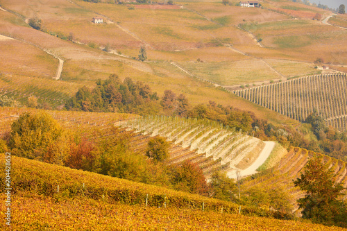 Fotobehang Wijngaard Vineyards and hills in autumn with yellow leaves in a sunny day in Piedmont, Italy