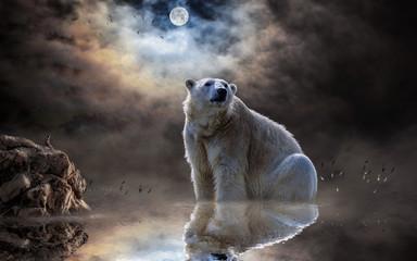 polar bear, ocean, reflection, mammal