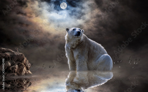 Fridge magnet polar bear, ocean, reflection, mammal