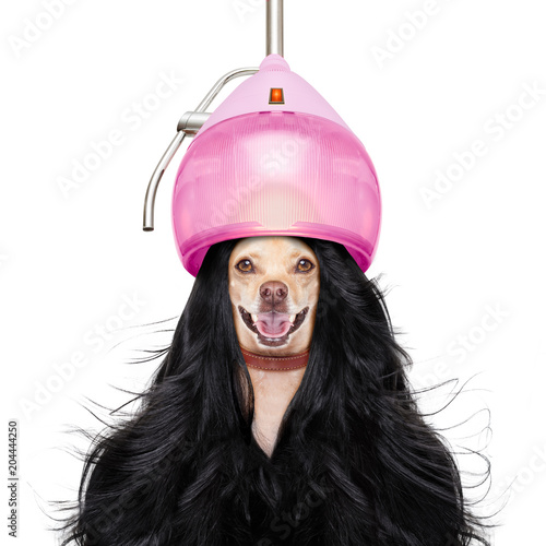 Fotobehang Kapsalon grooming dog at the hairdressers