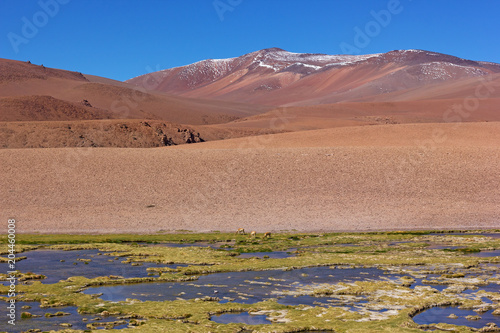 Picturesque landscape with grassland on foreground and mountains range on the horizon. Majestic landscape with animals of Atacama Desert, Chile.