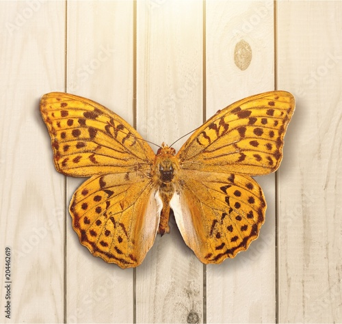 Plexiglas Vlinder Butterfly.