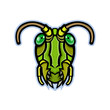 Mascot icon illustration of head of a grasshopper or locust, insects of the suborder Caelifera within the order Orthoptera, viewed from front on isolated background in retro style.