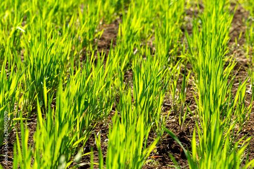 Aluminium Lime groen beautiful Green field