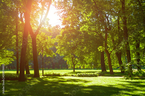 Fotobehang Zomer Summer landscape - sunny summer city park with green summer trees in sunny weather