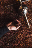 Man's hands holding freshly roasted aromatic coffee beans over a modern coffee roasting machine.