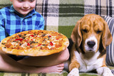 funny boy and dog beagle eating pizza on the sofa in the room