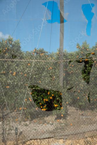 Obrażenia od szkód na plantacji
