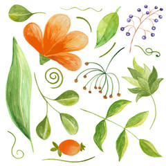 Set of paint floral elements, watercolor flowers and leaves