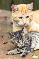 Orange Cat with kitten