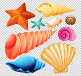 A Set of Seashell for Beach - 204584242