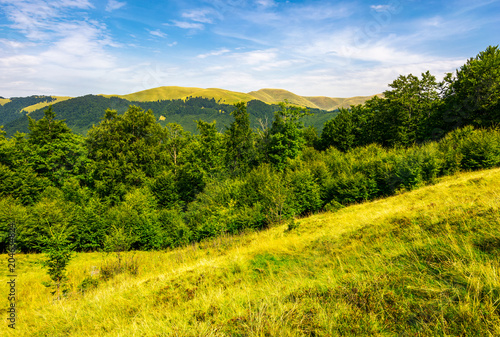 Fotobehang Oranje forested hills and meadows of Svydovets ridge. lovely summer landscape of Carpathian mountains in afternoon