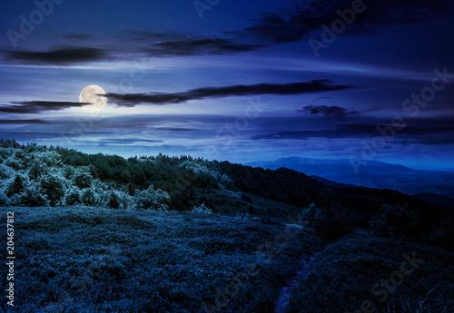 footpath through grassy mountain meadow at night in full moon light. beautiful Carpathian scenery