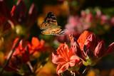 Schmetterling 479