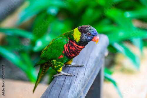 Aluminium Papegaai Parrot in the bird park