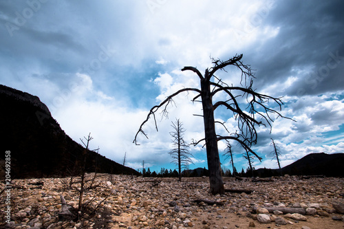 Plexiglas Landschappen View from Rocky Mountain National Park in Colorado with lone bare tree and ominous sky