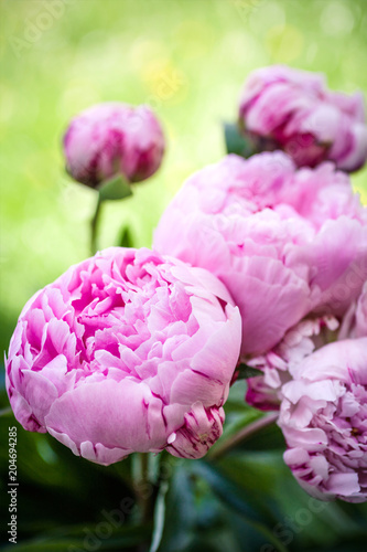 Beautiful peonies in a vase, vintage close up shot - 204694285