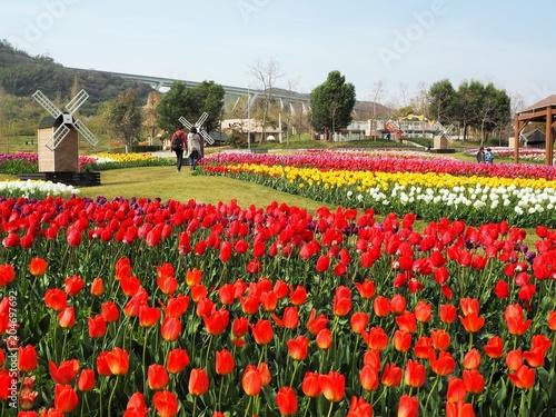 Plexiglas Tulpen the tulip garden