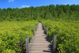 wooden bridge in green mangrove and blue sky nature outdoor landscape background