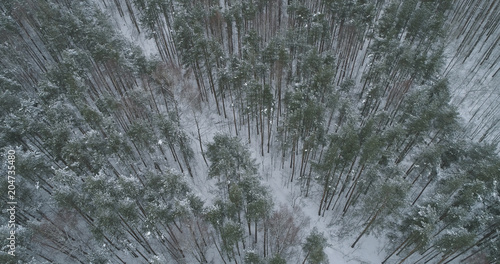 aerial view of pine forest on a winter day