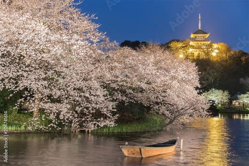 Fridge magnet Yokohama Sankeien garden , a traditional and typical Japanese-style garden in Sakura bloom with light up