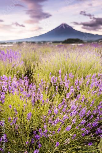 Aluminium Lavendel View of Mountain Fuji and lavender fields in summer season at Lake kawaguchiko