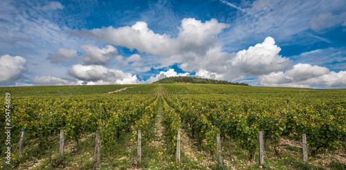 Fotobehang Wijngaard The Grand Cru vineyards of Chablis, Burgundy, France