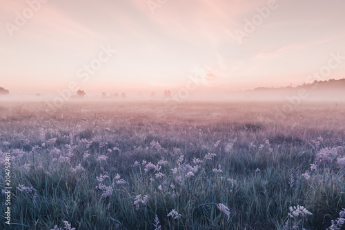 sunrise field of blooming pink meadow flowers - 204752481