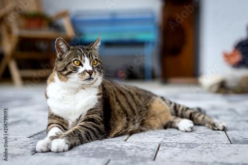 Fototapeta Katze schaut zur Seite