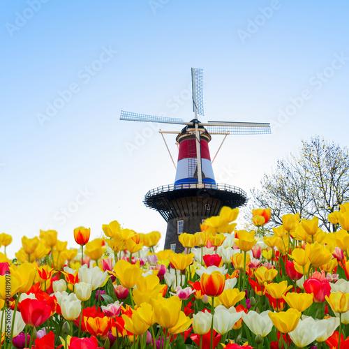 Plexiglas Tulpen Dutch wind mills