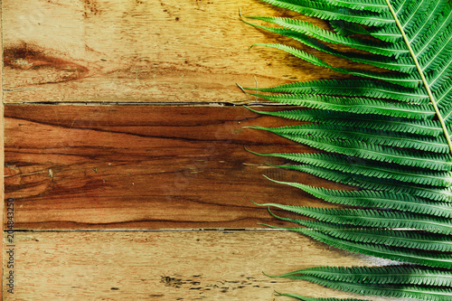 Wood background and green fern leaves with sunshine. Empty space for text or create montage product display.