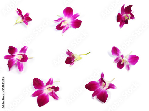 Fototapeta pink orchids on white background