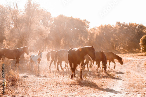 Wild horses grazing in the meadow.