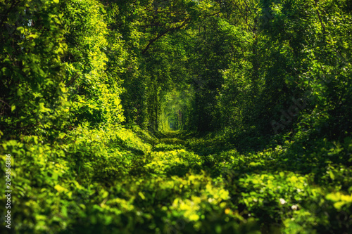 Piękny tunel zielonych drzew. Tunel Miłości. Stara zaniechana linia kolejowa w alei zieleni drzewa.