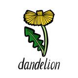 vector flower of dandelion