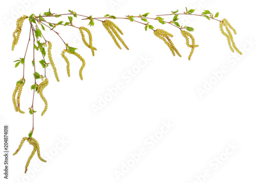 Fototapeta Background of the birch branches laid out left and top