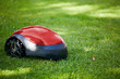Robot lawn mower on summer meadow in the garden