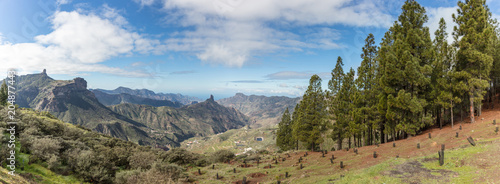 Fototapeta Abholzung von Wald auf Gran Canaria