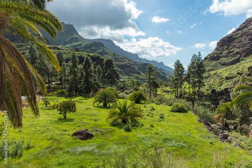 Üppige Ebene im Tal auf Gran Canaria