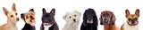 Pets - 204879073