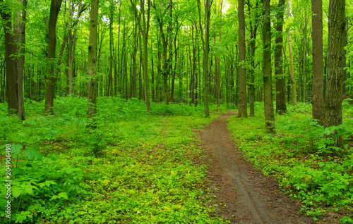 Green forest and path - 204906498