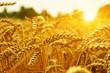 Leinwanddruck Bild - Wheat field on sun.