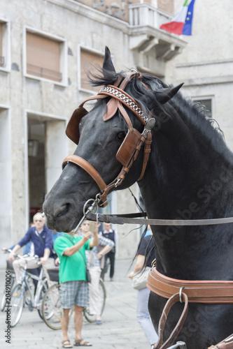 Plexiglas Paarden Cavalli