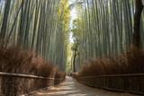 京都嵐山 竹林の小径