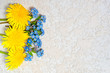 dandelions and forget me nots laying on the white textured cement background, top view with copy space for your text.