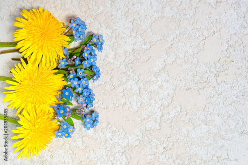 dandelions and forget me nots laying on the white textured cement background, top view with copy space for your text. - 204935485